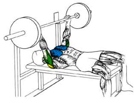 For Example When On The Bench Press Weight Is PUSHED Away From Body And You Feel It In Your Chest A Bit Shoulders