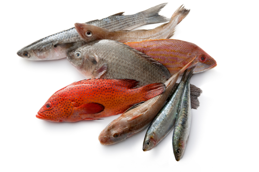 Healthy eating bodybalance for Healthiest fish to eat