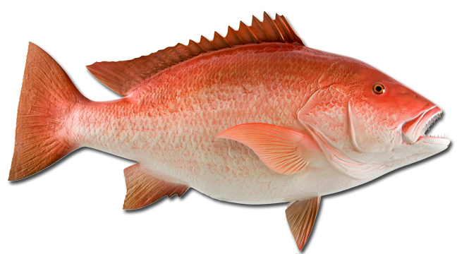 One fish two fish red fish blue fish the most for Red saltwater fish
