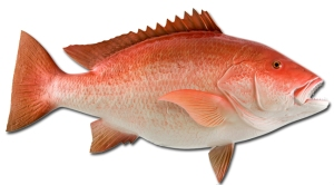 red-snapperfish-large
